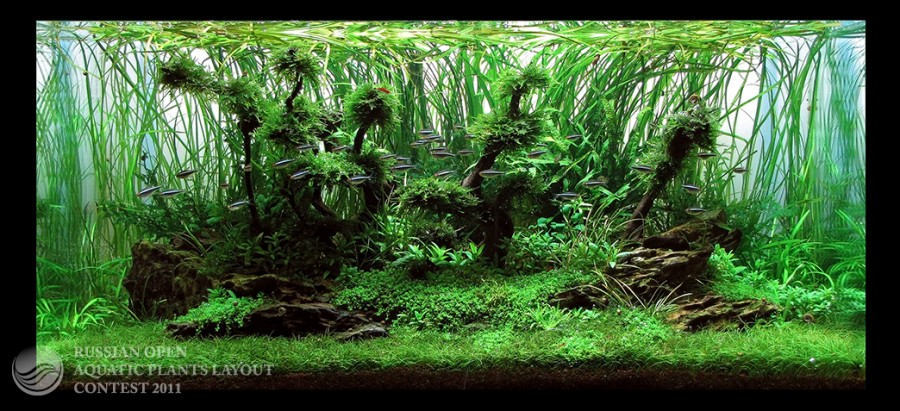 The International Aquatic Plants Layout Contest 2011 79