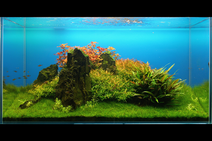The International Aquatic Plants Layout Contest 2011 793
