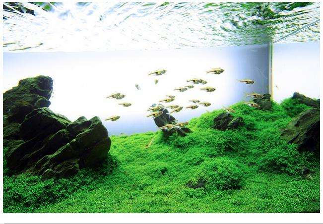 The International Aquatic Plants Layout Contest 2011 80