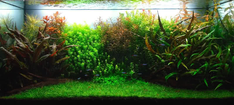 The International Aquatic Plants Layout Contest 2011 814