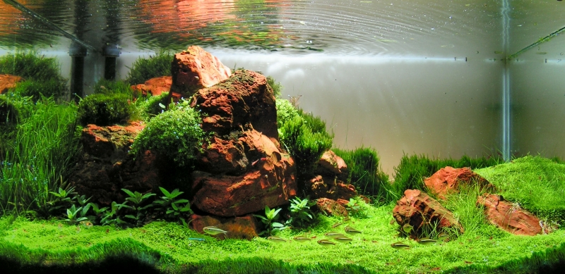 The International Aquatic Plants Layout Contest 2011 88
