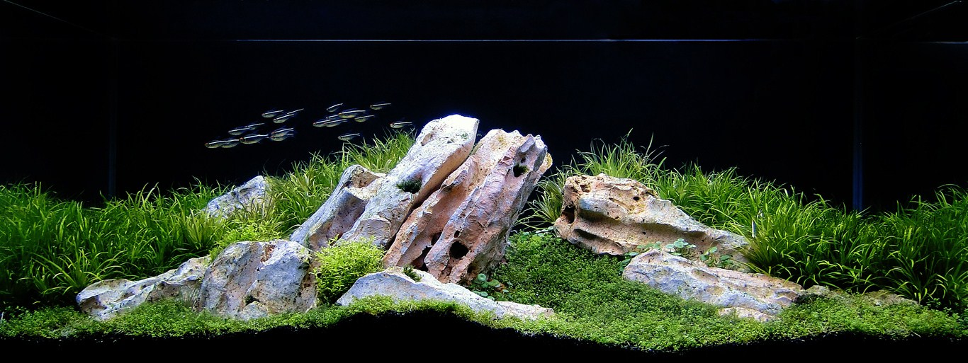The International Aquatic Plants Layout Contest 2011 90