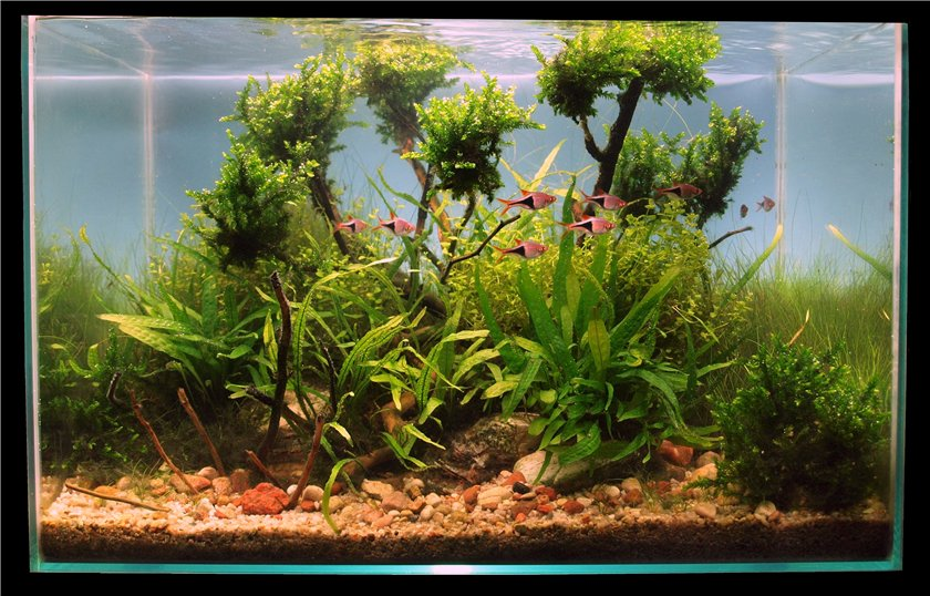 The International Aquatic Plants Layout Contest 2011 965