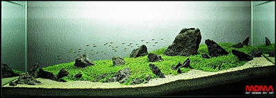 The International Aquatic Plants Layout Contest 2011 99