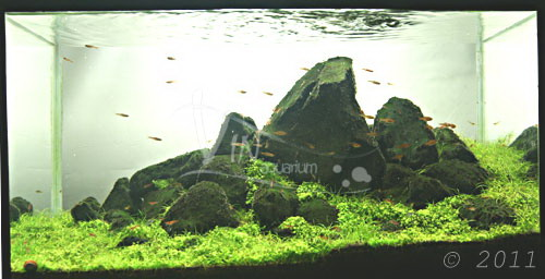 The International Aquatic Plants Layout Contest 2011 Maybe-ranking-671
