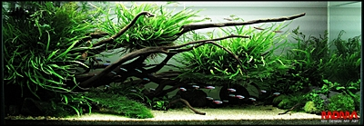 The International Aquatic Plants Layout Contest 2011 Rank-132