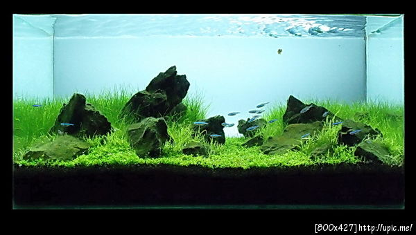The International Aquatic Plants Layout Contest 2011 Rank-216