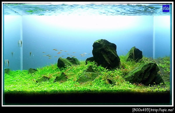 The International Aquatic Plants Layout Contest 2011 Rank-441