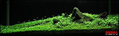 The International Aquatic Plants Layout Contest 2011 Rank-559