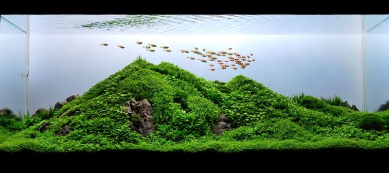 The International Aquatic Plants Layout Contest 2011 Ranking-055
