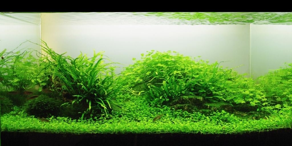 The International Aquatic Plants Layout Contest 2011 Ranking-1025