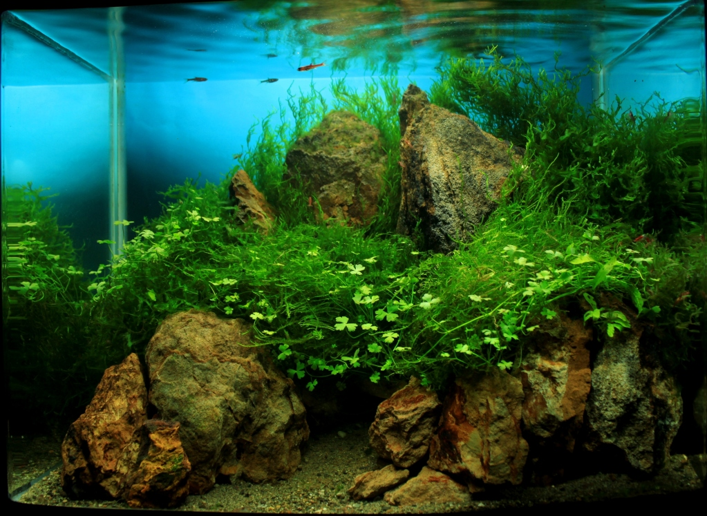 The International Aquatic Plants Layout Contest 2011 Ranking-1033