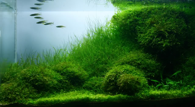 The International Aquatic Plants Layout Contest 2011 Ranking-1284