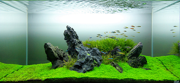 The International Aquatic Plants Layout Contest 2011 Ranking-137