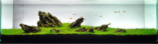 The International Aquatic Plants Layout Contest 2011 Ranking-256