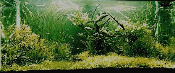The International Aquatic Plants Layout Contest 2011 Ranking-603