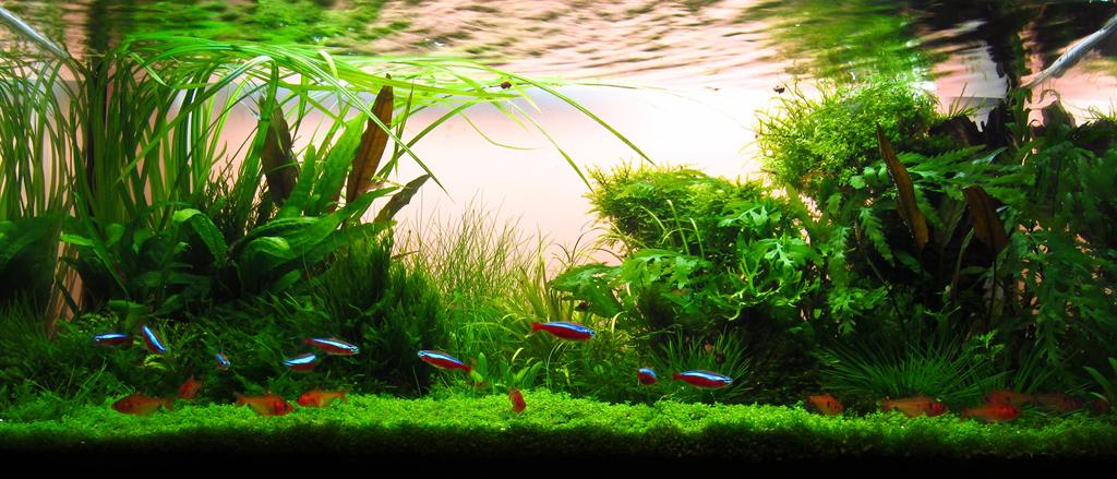 The International Aquatic Plants Layout Contest 2011 Ranking-929