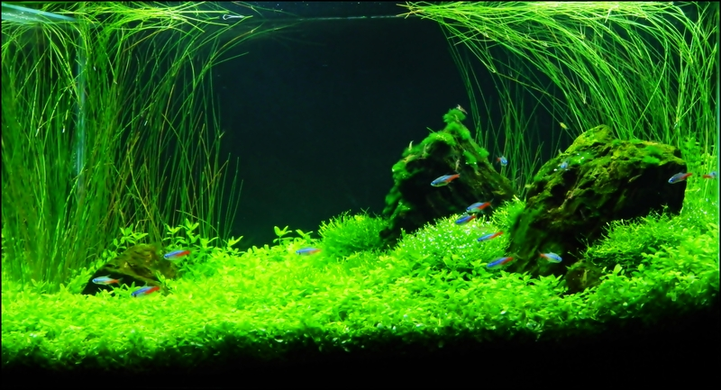 The International Aquatic Plants Layout Contest 2011 Ranking-945