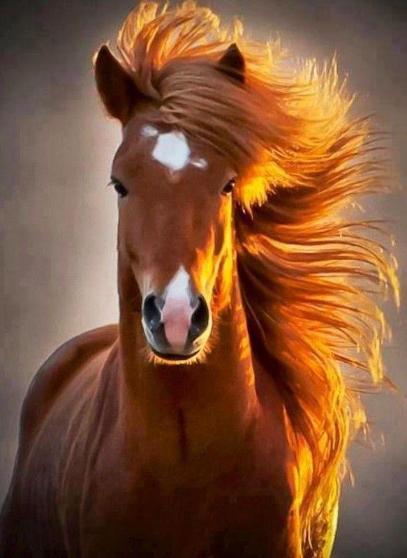 les chevaux.. - Page 15 B7295e56