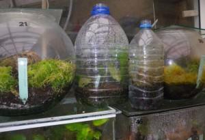 Vegan Attitude - Page 2 Aquariums-et-bouteilles-en-plastique-pour-bouturages-300x205