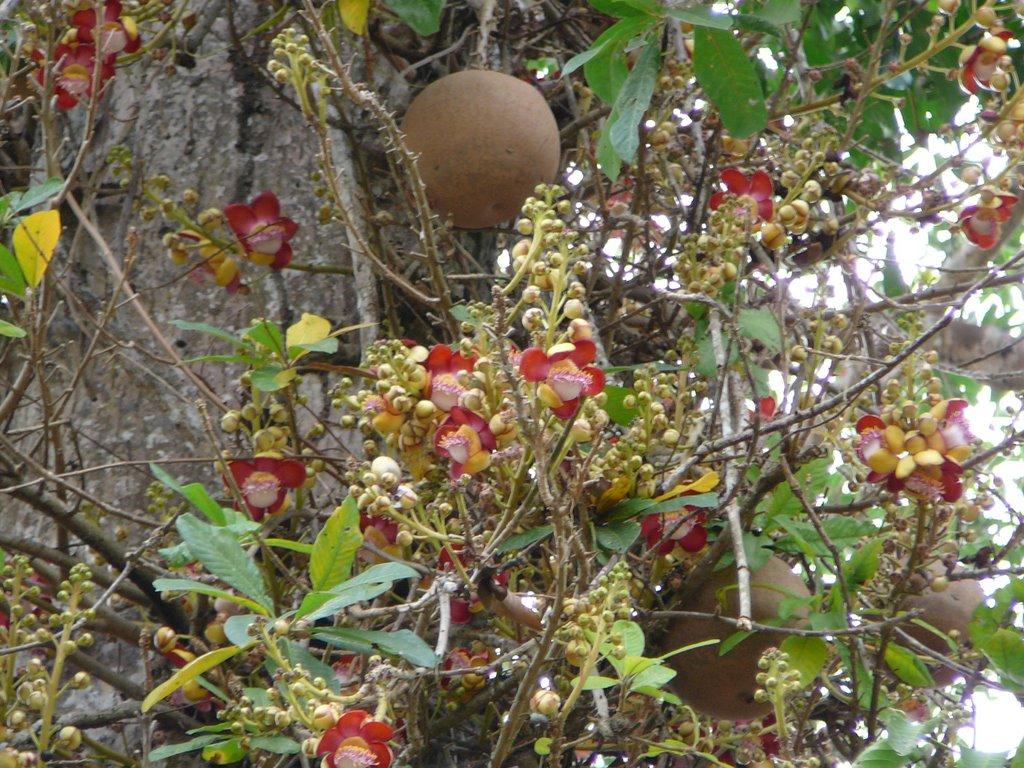 Loài cây nở hoa tuyệt đẹp nhưng không ai dám lại gần chỉ vì... Loai-cay-no-hoa-cuc-dep-nhung-khong-ai-dam-lai-gan_064bb6d575