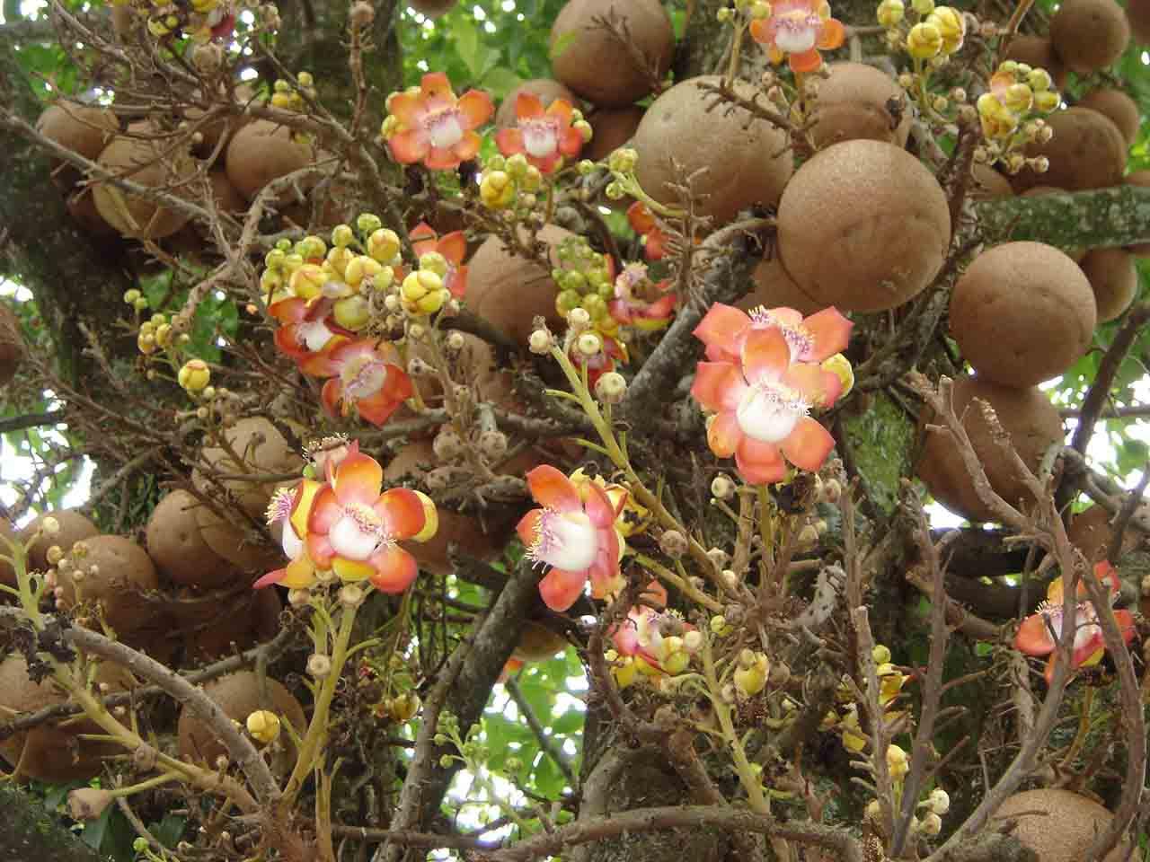Loài cây nở hoa tuyệt đẹp nhưng không ai dám lại gần chỉ vì... Loai-cay-no-hoa-cuc-dep-nhung-khong-ai-dam-lai-gan_0d8b3d100b