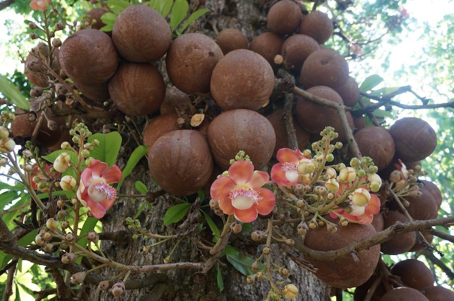 Loài cây nở hoa tuyệt đẹp nhưng không ai dám lại gần chỉ vì... Loai-cay-no-hoa-cuc-dep-nhung-khong-ai-dam-lai-gan_1c7b190426