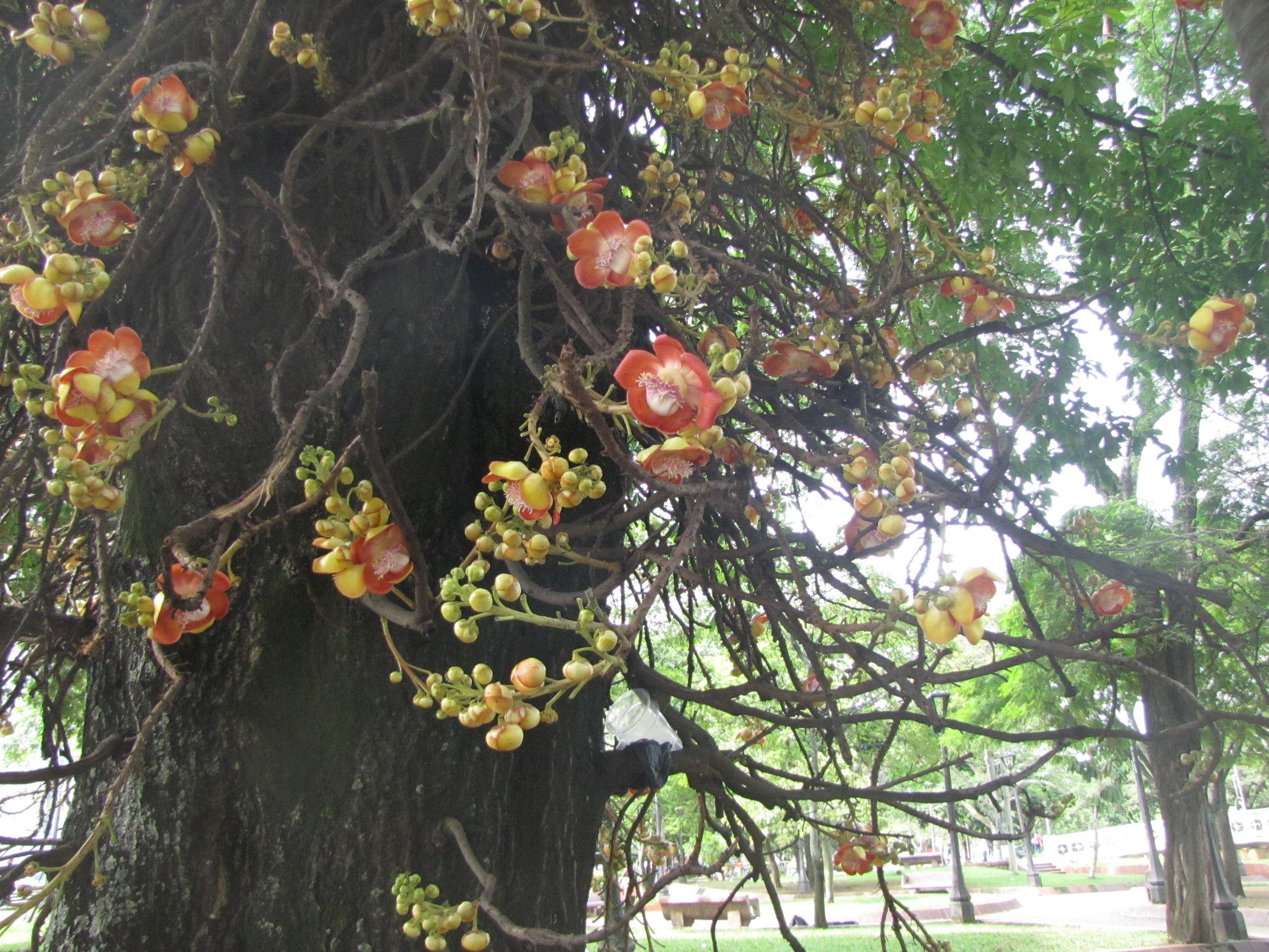 Loài cây nở hoa tuyệt đẹp nhưng không ai dám lại gần chỉ vì... Loai-cay-no-hoa-cuc-dep-nhung-khong-ai-dam-lai-gan_85255298f2