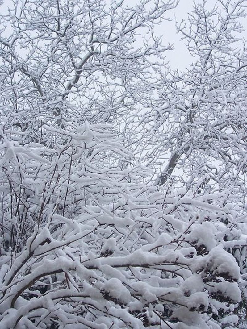 La neige en montagne ... Neige