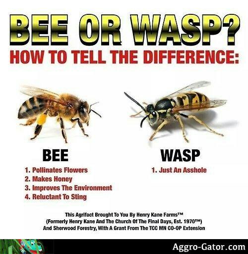Another damn wasp nest! (long rant) Aggro-gatordotcom27101