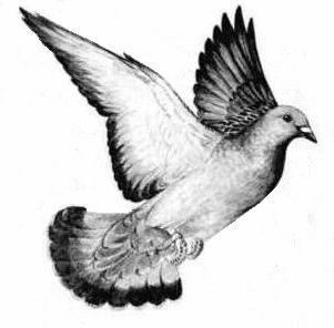 Vu sur leboncoin.fr .. - Page 32 Pigeon_index