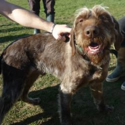 GAVROCHE - x korthal 8 ans (5 ans de refuge)- AID à Chateaubriant (44) 774_gavroche1