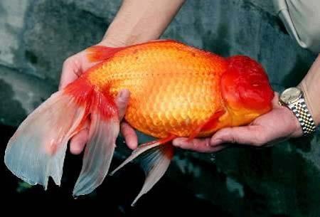 Présentation de Padawanfish Sans-titre-3