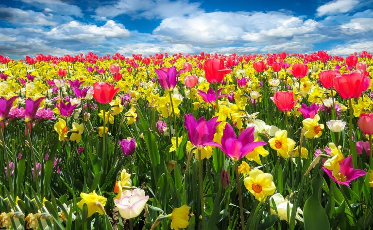 С ДНЕМ РОЖДЕНИЯ, АЛАНИЯ! Spring-promotion-768x473