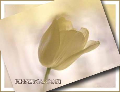 من هنا اجمل الورود لتهديها لاصدقائك واحبابك في المنتدى وخارج المنتدى  Pic002