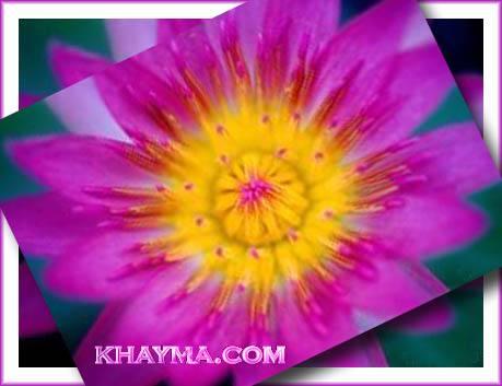 من هنا اجمل الورود لتهديها لاصدقائك واحبابك في المنتدى وخارج المنتدى  Pic006
