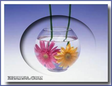 من هنا اجمل الورود لتهديها لاصدقائك واحبابك في المنتدى وخارج المنتدى  Pic008