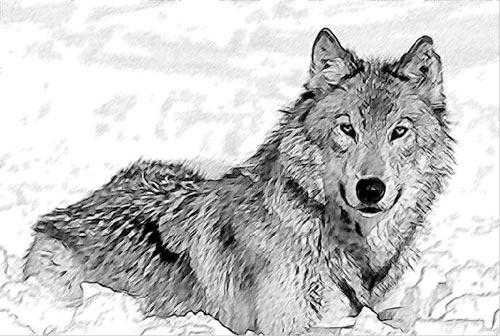 برنامج لتحويل الصور إلى رسومات قلم رصاص Bw-sketch-default