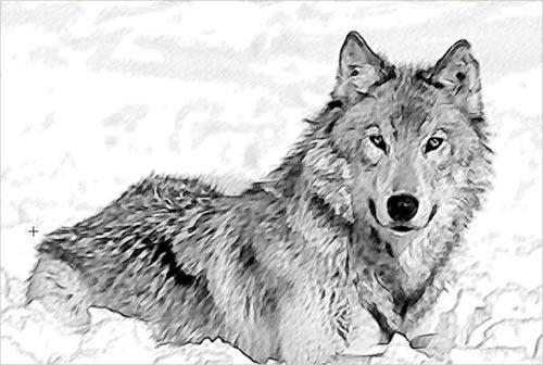 Tiempo de lobos - Martin Cruz Smith  Bw-sketch