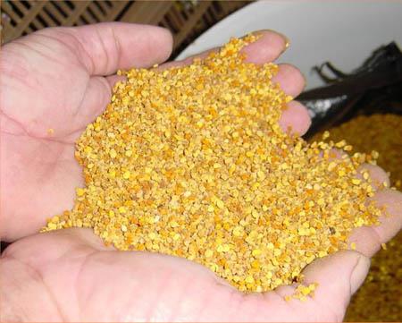 تنشيط الذاكرة وعلاج النسيان Pollen-grains