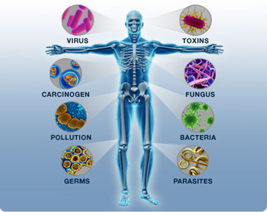من عجائب جهاز المناعة في جسم الإنسان %D9%85%D9%86%D8%A7%D8%B9%D8%A9-%D8%A7%D9%84%D8%AC%D8%B3%D9%85