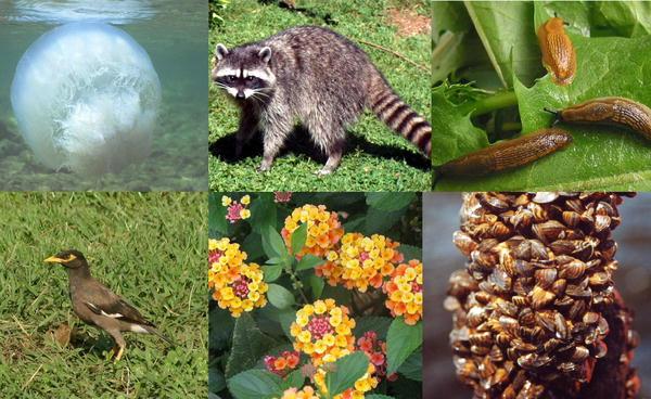ارتفاع حرارة الأرض يؤثر على التنوع الحيوي  Biodiversity-