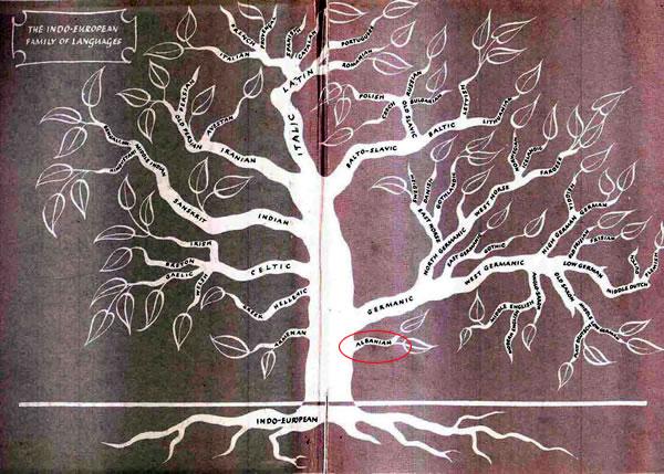 The Albanian language is the oldest Indo-European Indoeuropian_language_tree_small