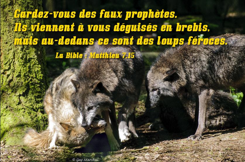 """Le site """"Amis de Garabandal"""" (Suisse) méprise le Pape François !!! Loups_fe__769_roces_jaunes_1_1"""