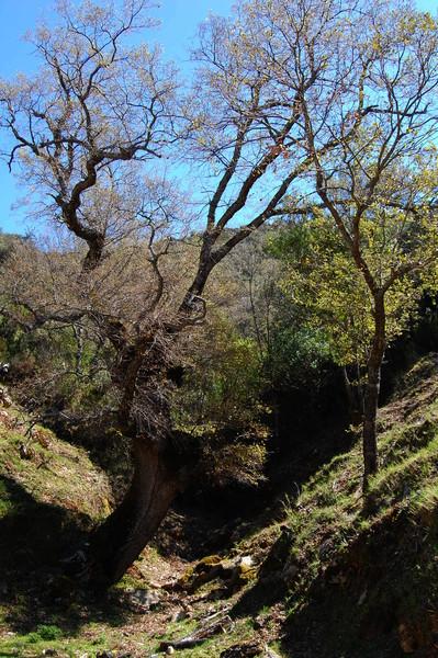 Llanos de Rabel R_dsc_5833_n1