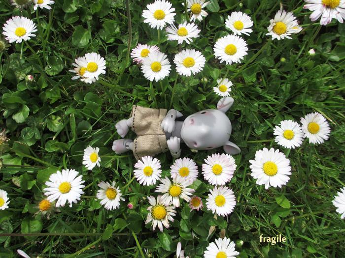 Fleurs vivantes - et mortes (DHS Mica) p7 - Page 7 Mica_asimov_17