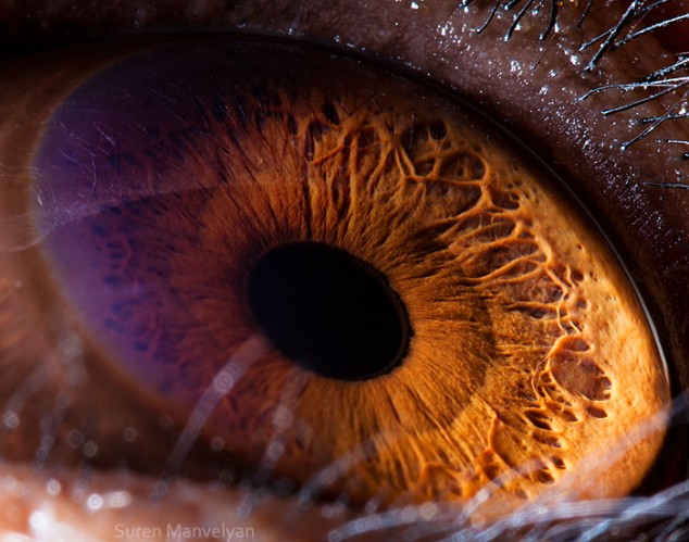 20 close-up photos of animal eyes show nature's wonderfully extreme ocular diversity Animal-Eyes-Chimpanzee-634x499