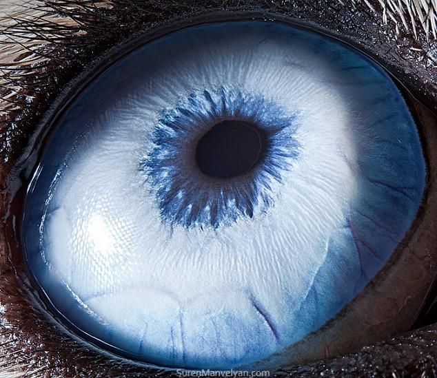20 close-up photos of animal eyes show nature's wonderfully extreme ocular diversity Animal-Eyes-Husky-634x549