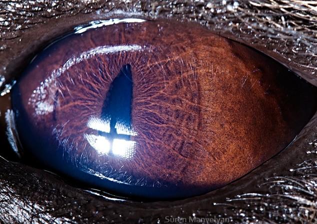 20 close-up photos of animal eyes show nature's wonderfully extreme ocular diversity Animal-Eyes-Hyena-634x447