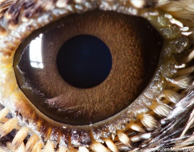 20 close-up photos of animal eyes show nature's wonderfully extreme ocular diversity Animal-Eyes-Lark-634x498